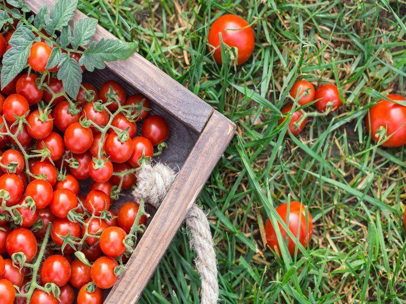 Pako Group HR - Работник на сбор урожая